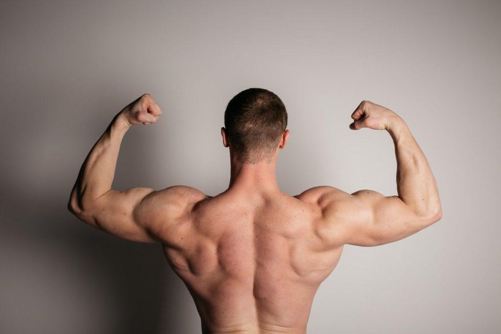 筋トレで鍛えていきたい主な筋肉