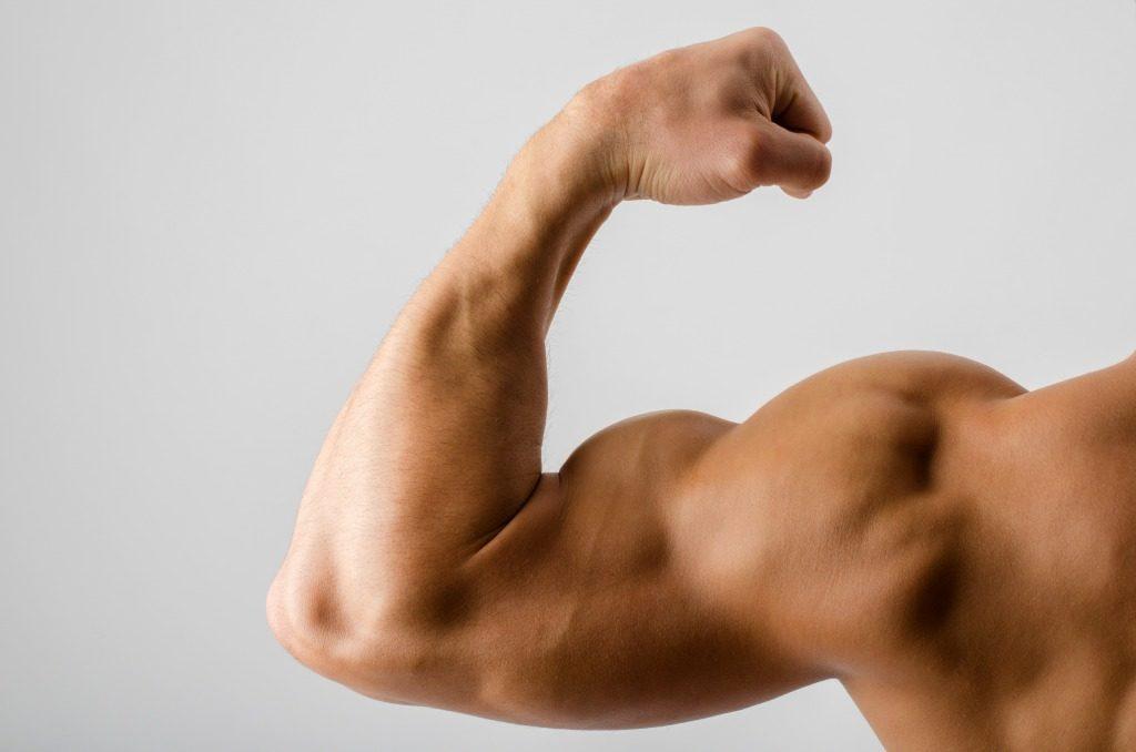 筋トレを行ううえで覚えておきたい筋肉