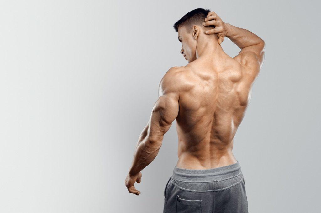 知っておきたい主な筋肉