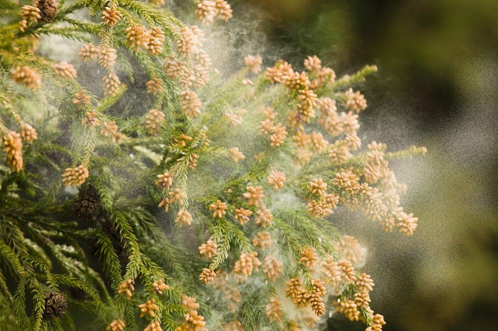 花粉対策メガネは花粉をどのくらいカットしてくれるかで選びましょう